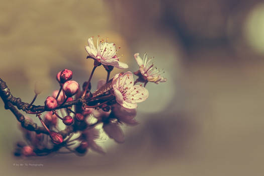 Blossom (Redscale XR)