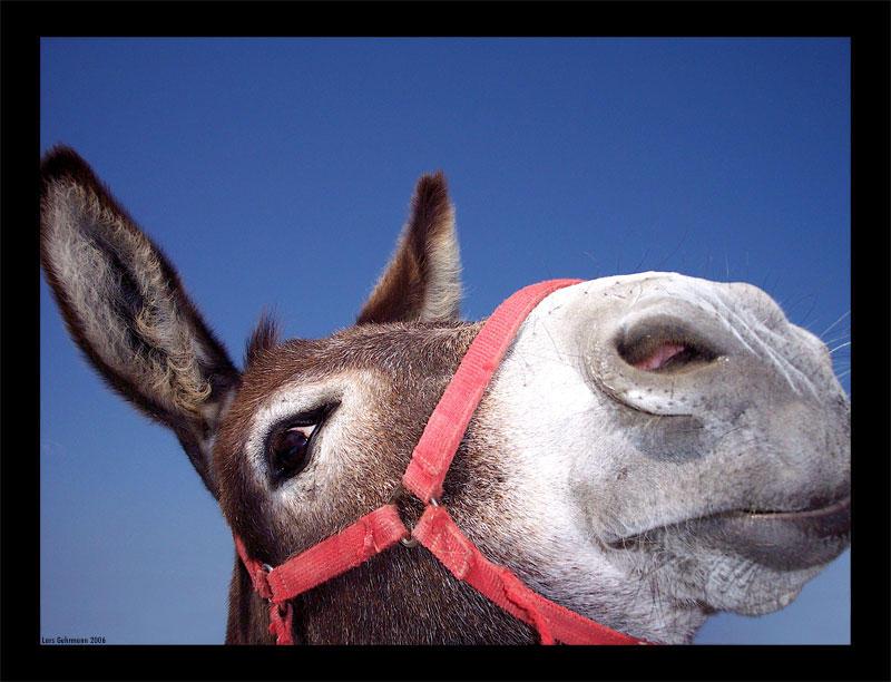 A Donkey by zwiebelfarmer de
