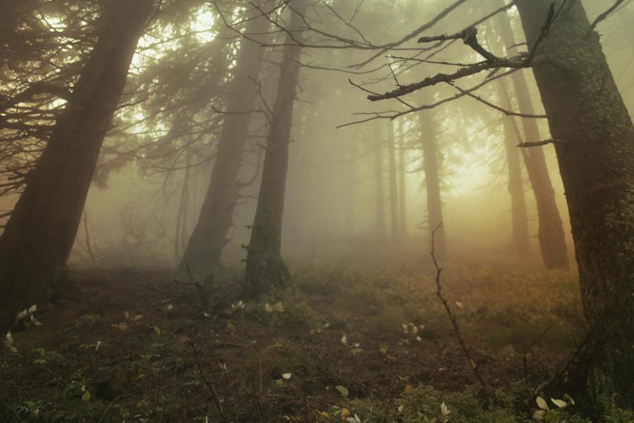 fog by yvasss