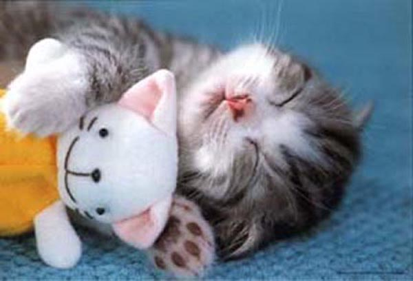 Kitty with doll