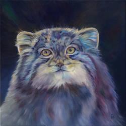 Manul-The Wild Cat