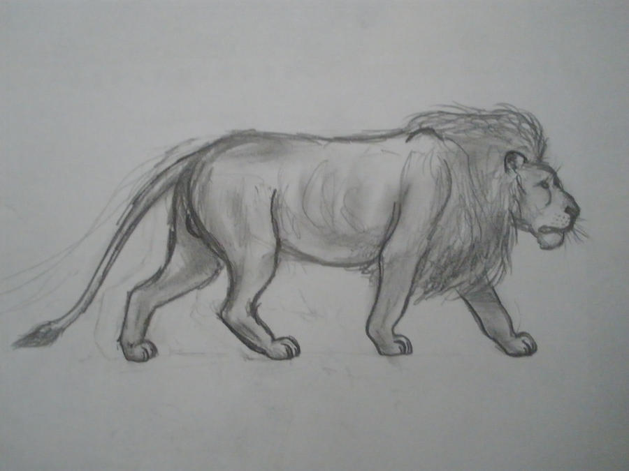 African Lion Full Body By Leadhead 95 On Deviantart