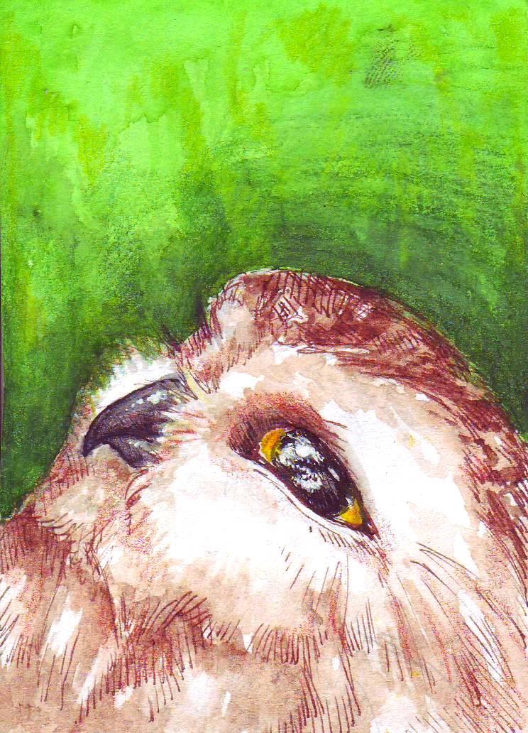 ACEO - OWL for Ryuu by SybilaSulfur