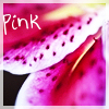 Icon Flower by SunnyKatharina