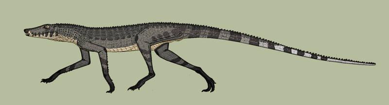 Coyote-croc redux: Agilisuchus 2.0.