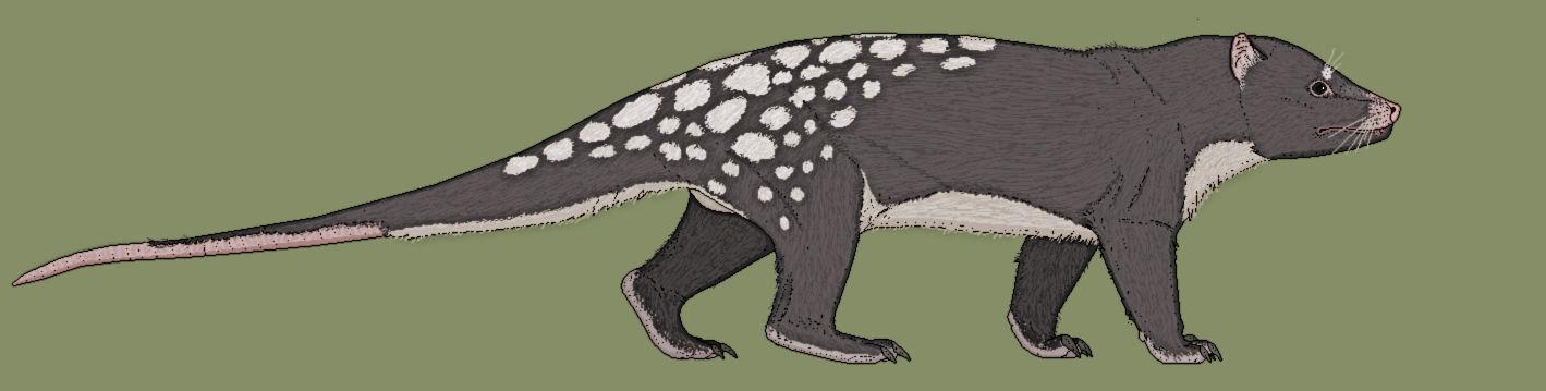 Megalothylus osteophagus, the Death Possum