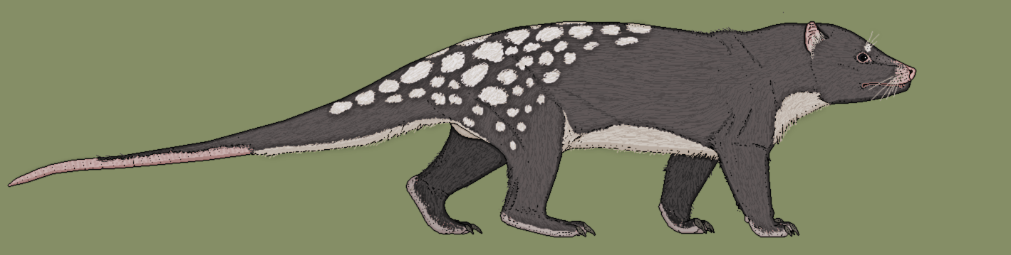 Megalothylus osteophagus, the Death Possum by Kazanlak10