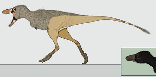 The Common Tyrant: Tyrannoferus tyrannoferus