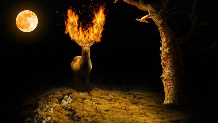 Deer Fantasy Photomanipulation