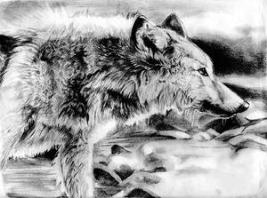 Wolf in the Water