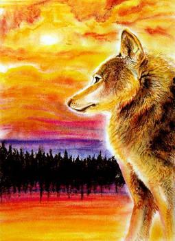 Wolf Watching Sunset