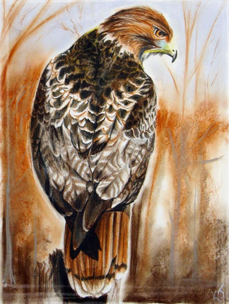 Mani the Hawk