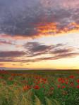summer sunset VII