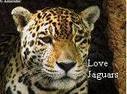 Jaguar stamp by fanfictionaxis