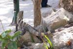 Mayan lizard 02 by fanfictionaxis