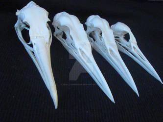Bird skulls sold.
