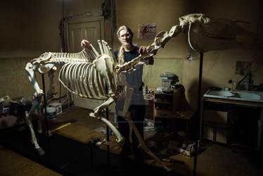 Kon (Equus caballus) Szkielet ~~ Skeleton