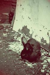 Rabbit by CRISTYNNA-NECROPOLIS
