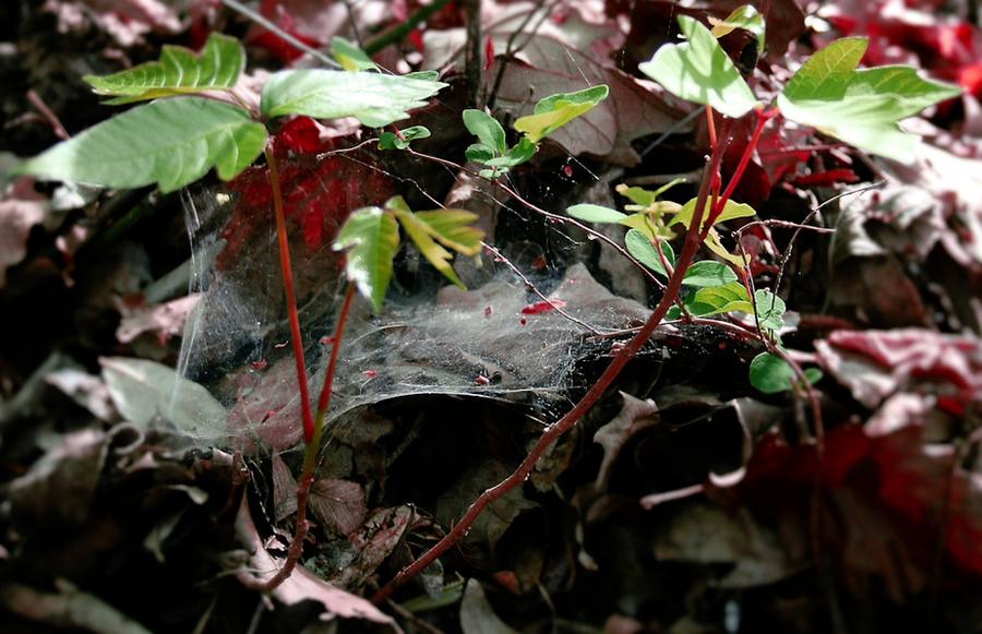 Fragile Web by crystalwizard