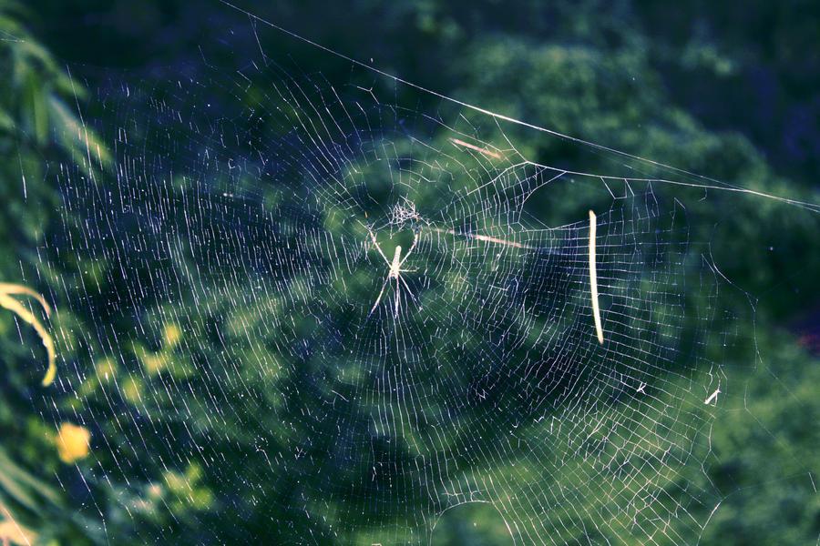 spider spider by ren241295