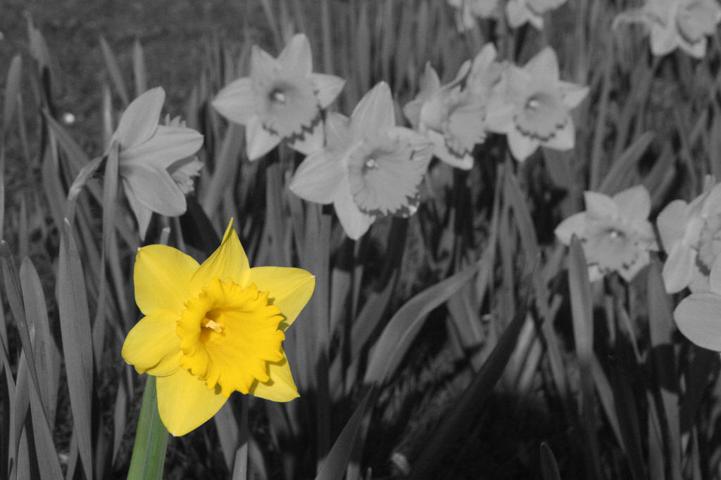 Narcissus by Rho96