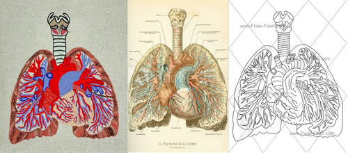 Vintage Anatomical Illustration Embroidery Pattern