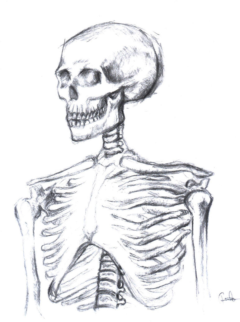 Skeleton Body Charcoal 2 By Pauloduquefrade On Deviantart