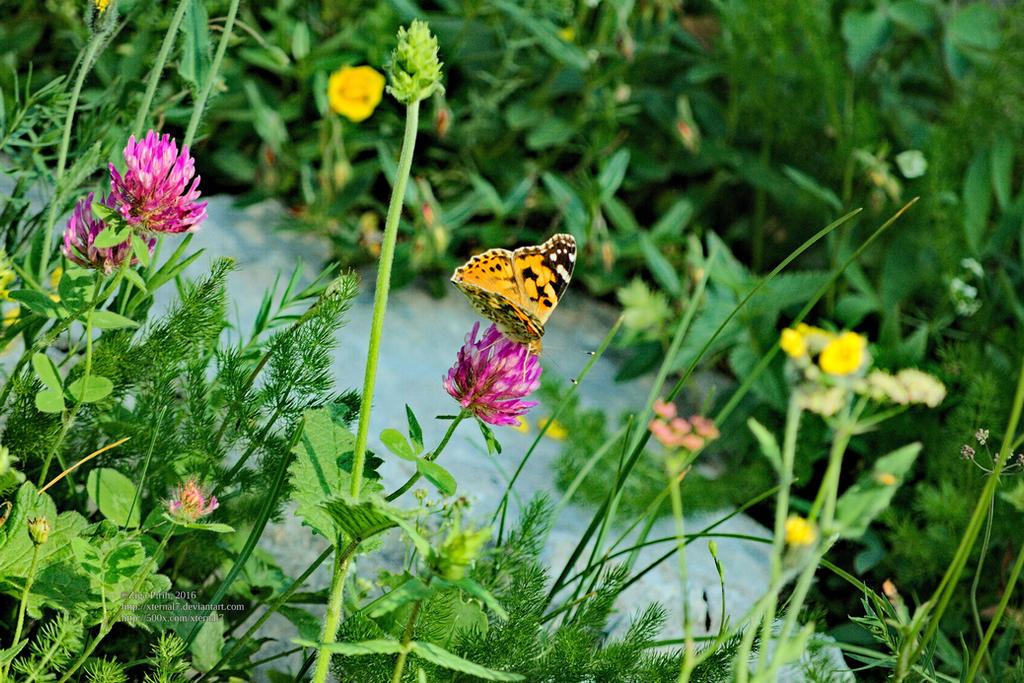 Butterfly II by xTernal7