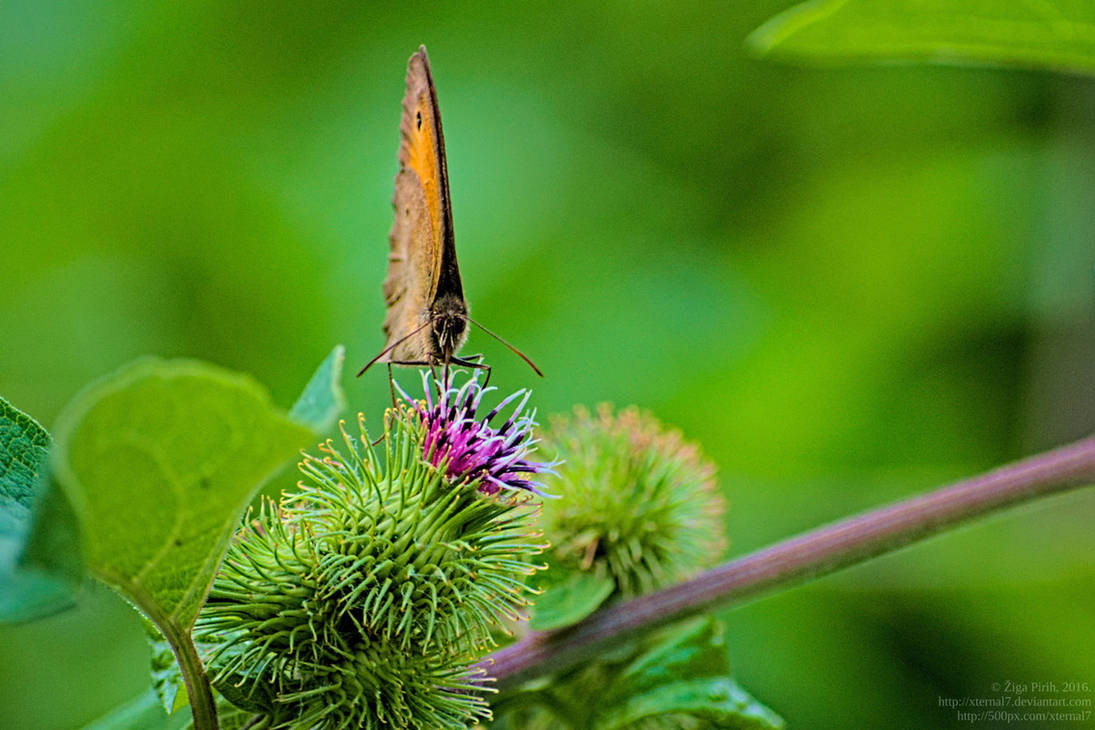 Butterfly III by xTernal7