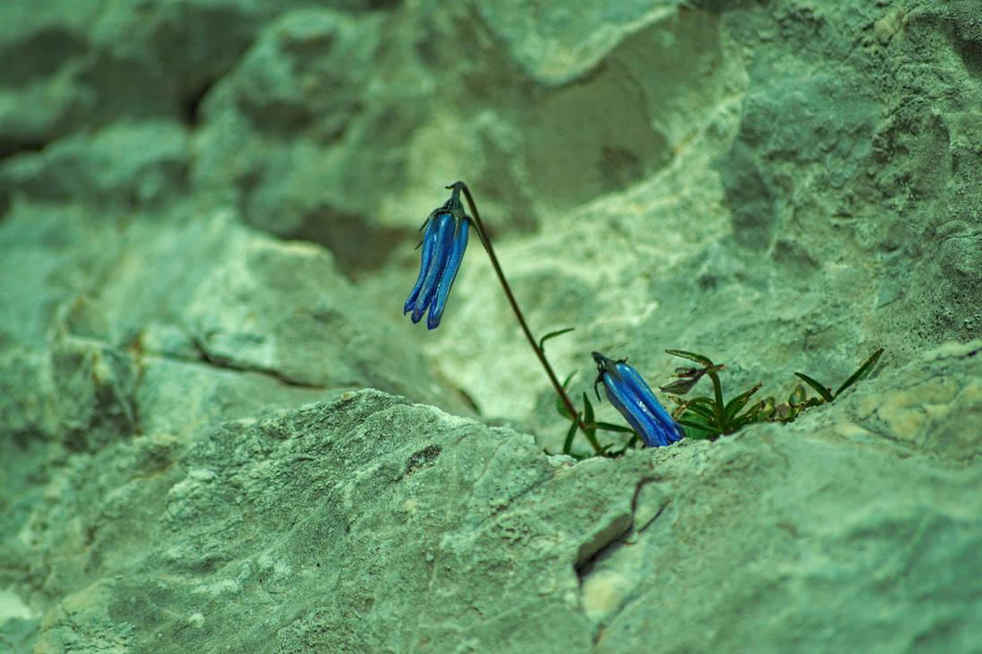 Mountain Flower by xTernal7