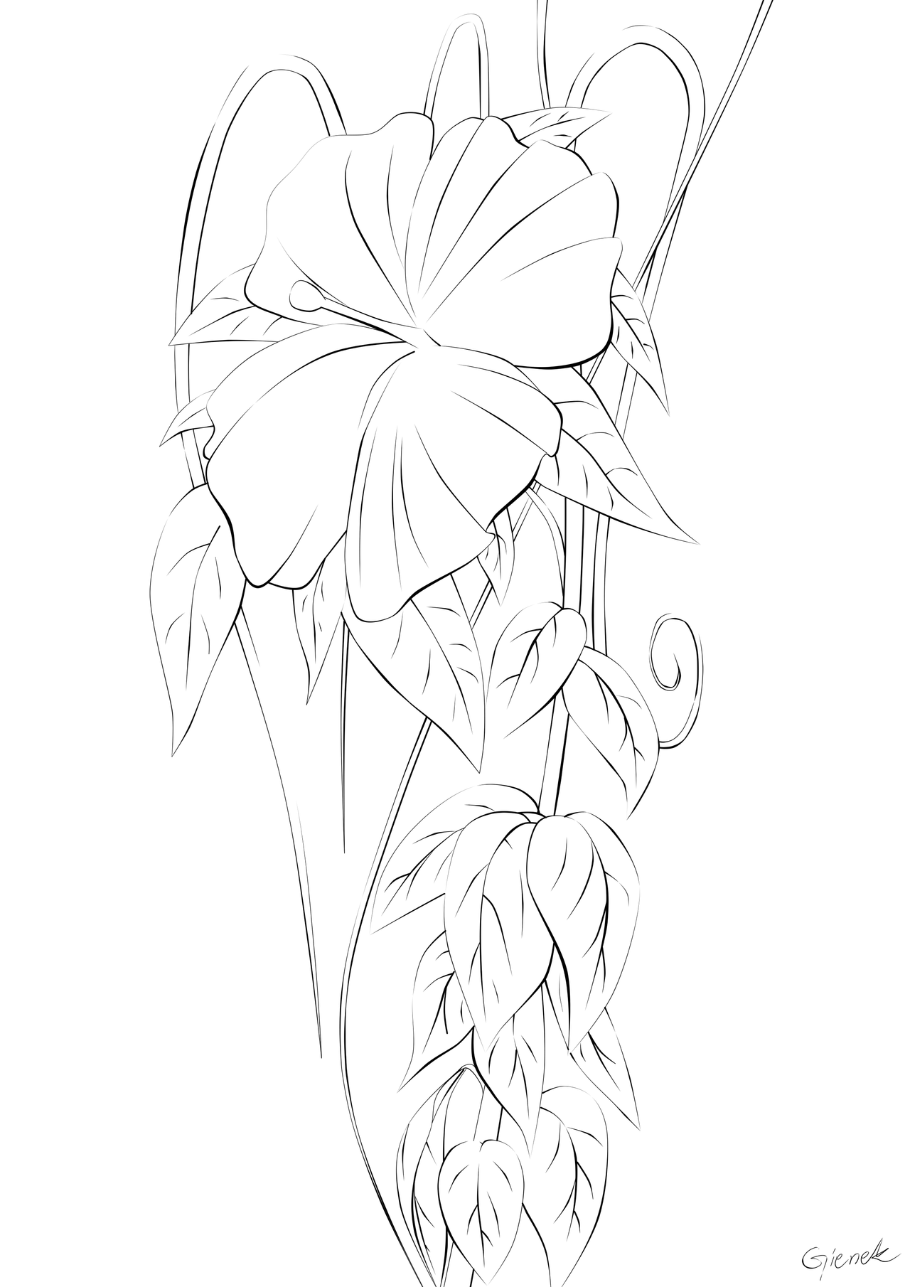 A drawing of a hawaiian flower hawaii flower lineart by izmirmasajfo