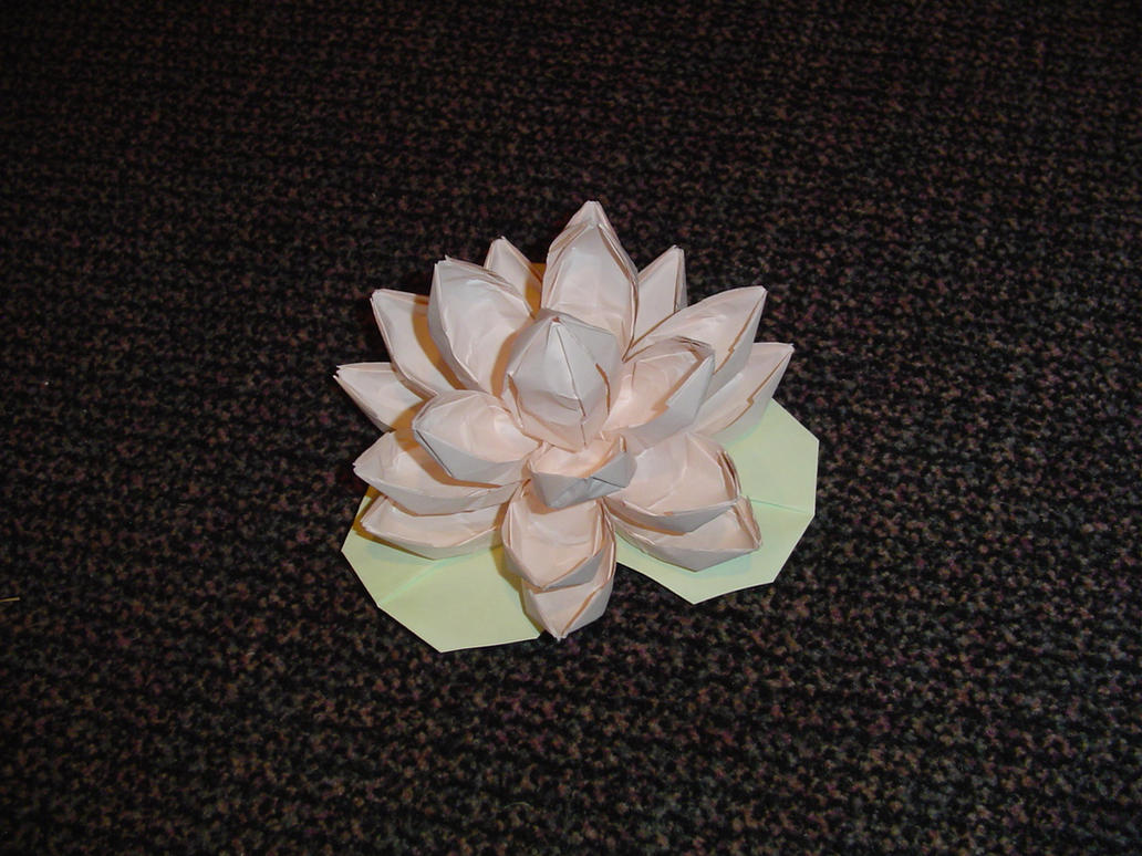 Lotus flower by lareun