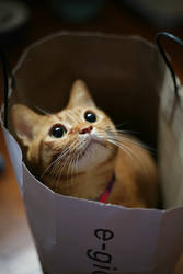 Cat In Bag by thexpression