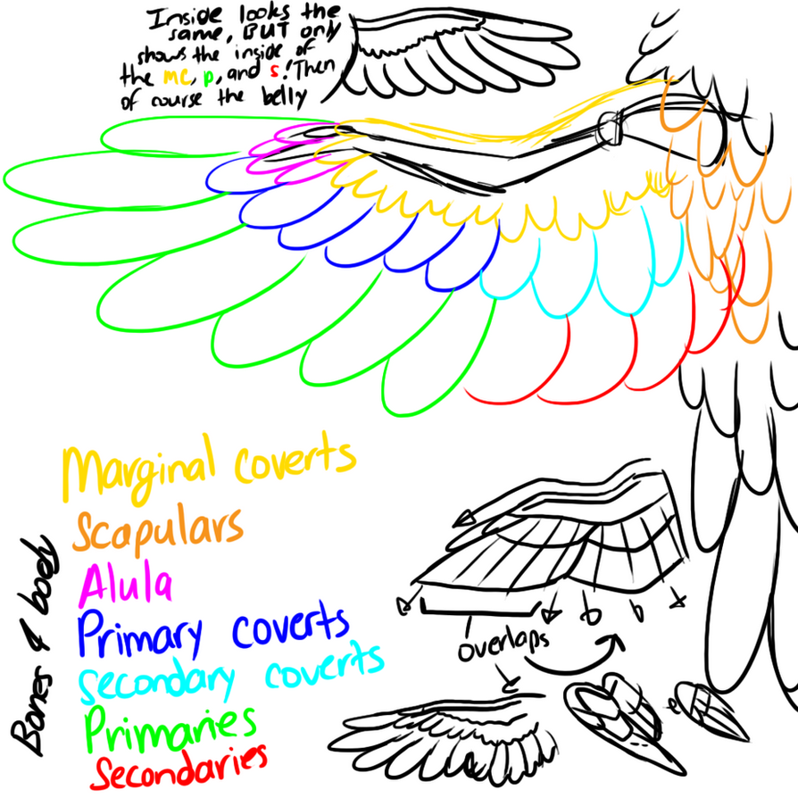 simple wing diagram by cavyspirit on deviantart : wing diagram - findchart.co