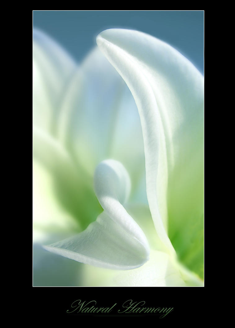 Natural Harmony by digitaldreamz666