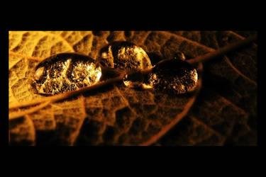 Amber Drops by Devlicharov