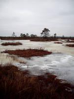 Swamp 9 by Kechake-stock