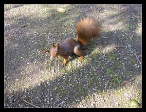 A Squirrel - I
