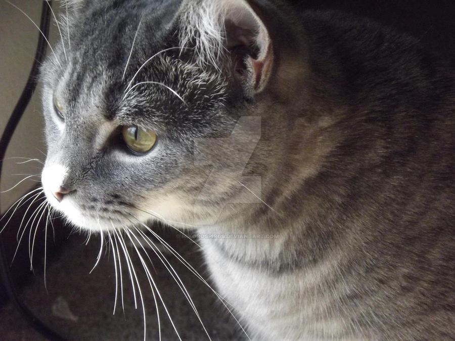 meow say meow by MikoroSpirus