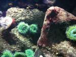Sealife 7