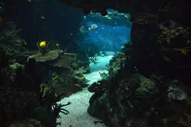 underwater background by suntwirl
