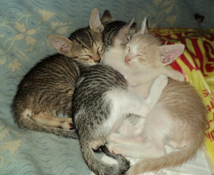Cat Gives Birth No Kittens