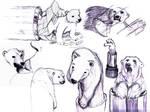 Polar Lipstick Bear