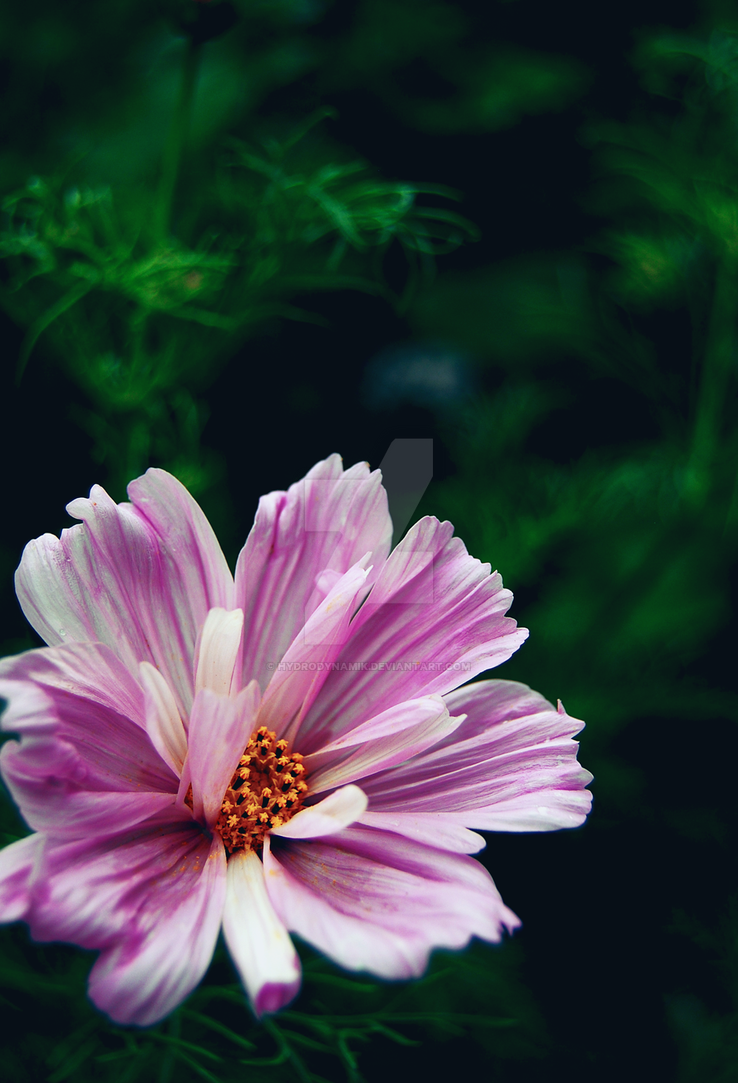 Freckled Flower by Hydrodynamik