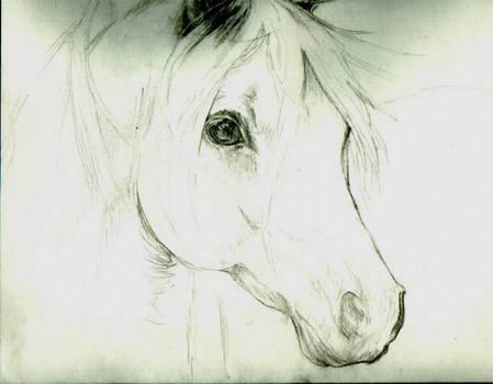 Horse Head_Portrait Sketch