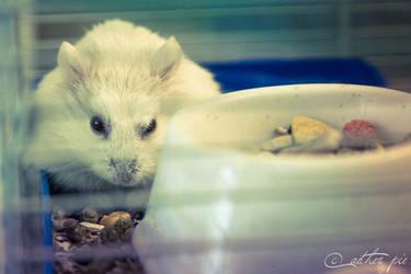 class hamster