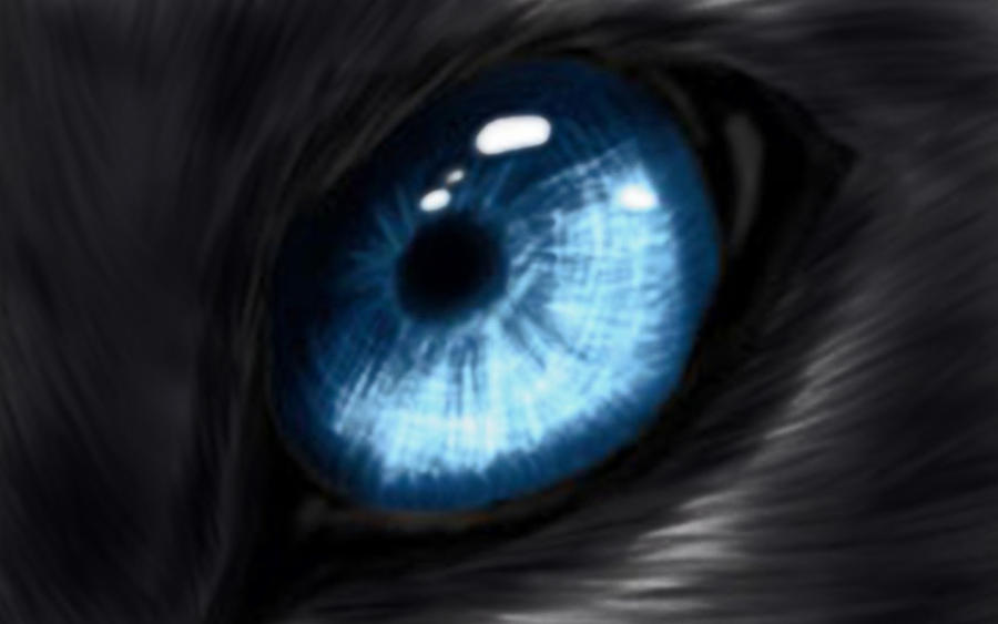 Wolf Eye Color Contacts Eye of the Wolf by Andalusiano