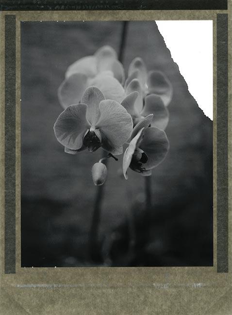 Orchidee 54 by MoiMM