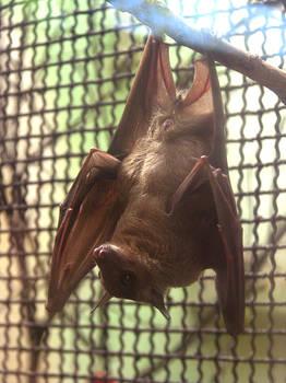 :: a bat ::