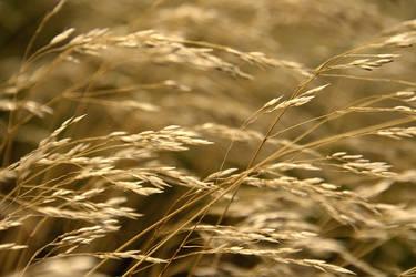 When the wind whispers. by Erdbeerstern